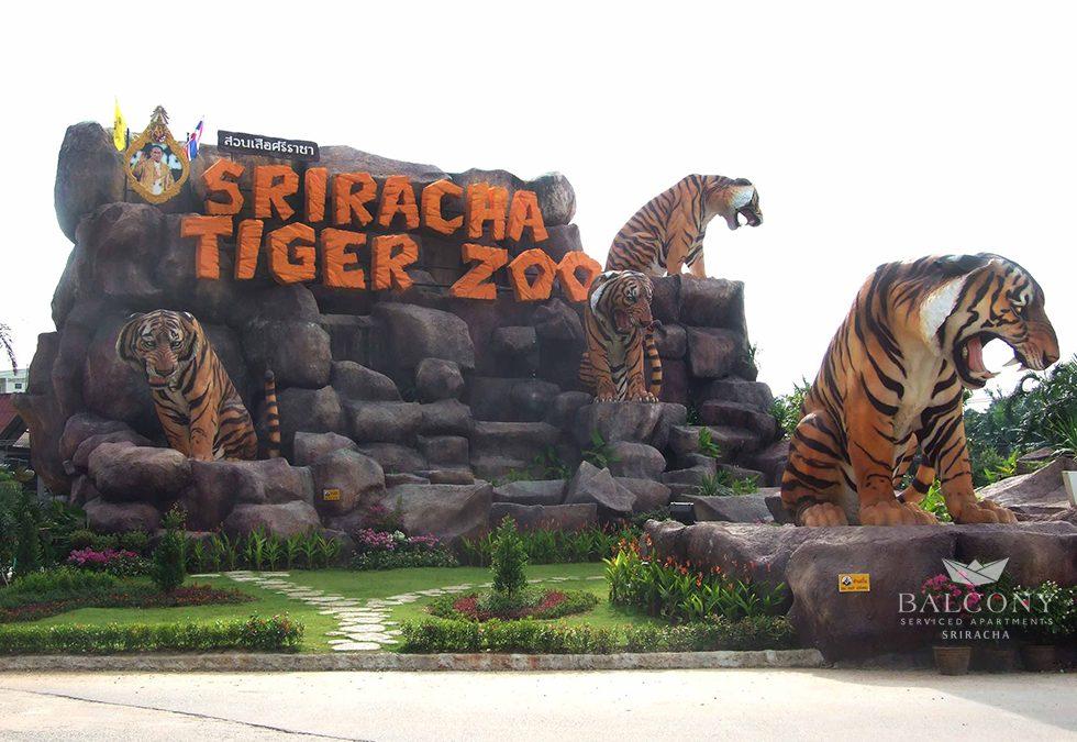 เที่ยวสวนเสือ ชมนางพญาแมงป่อง ระทึกใจโชว์จระเข้